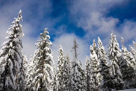 Winter scene Stock Photo - 6311957