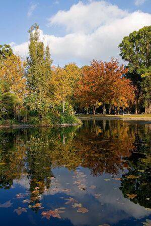 Autumn in the park photo