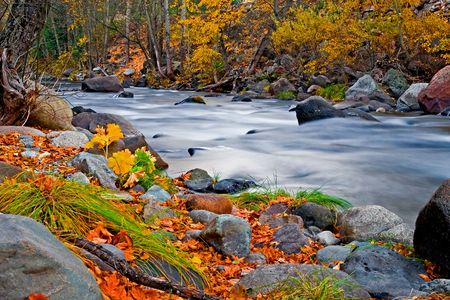 autumn colour:   Creek in the forest in Autumn