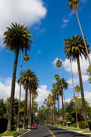 on palm tree: Streets of Beverly Hills, California