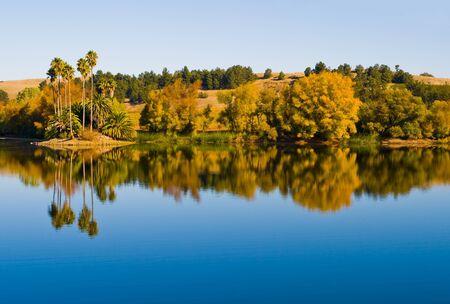Palmeras junto a un agua en el Valle de Napa