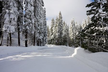 Snowy road through forest photo
