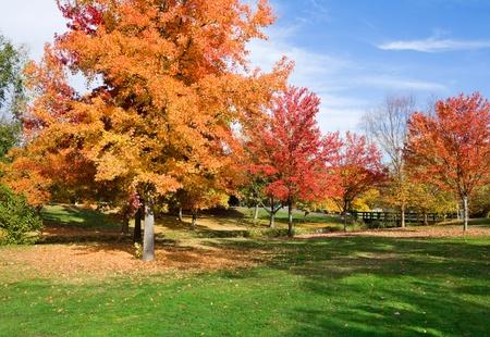 秋の公園で 写真素材