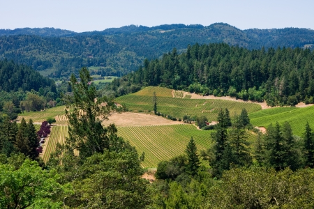 napa: Aerial view of Napa Valley, California