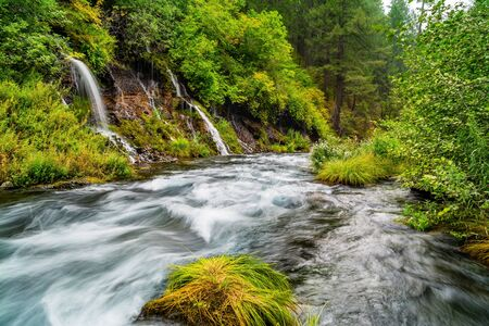 Waterfalls in the serene forest