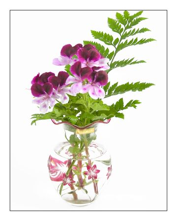 decore: Geranium Witchwood cut flowers with fern leaves in water filled vase against white background. Stock Photo