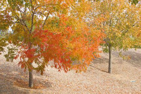 Beautiful landscape trees turnings autumn colors.