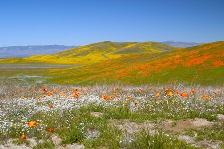 View of colorful flower fields including yellow, orange and white flowers.
