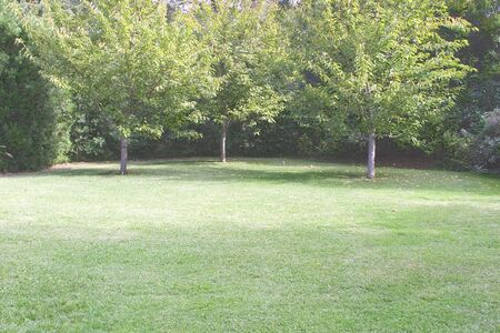 Open lawn space in secluded area of public garden. Imagens