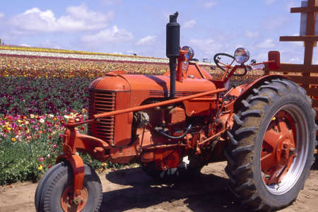 Red tractor parked near a large flower field. Imagens