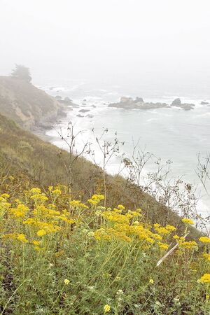 a beautiful scenic drive through Big Sur, California USA during the moring hours on a foggy day.