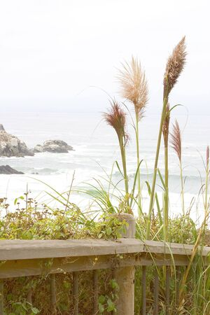 A walking path for hikers to experience the scenic seascapes and plants.