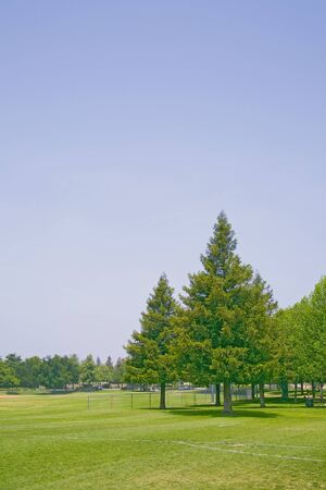 Group of trees in community park surrounding a picnic and play area.