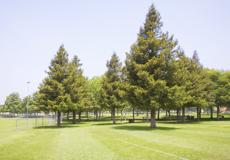 Group of trees surrounding a picnic and play area.
