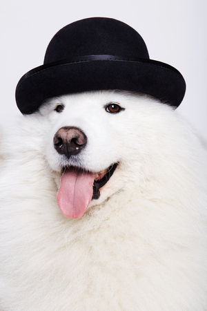 Dog in hat portrait in front of whihe background. Cute white doggy. Symbol of 2018 New Year