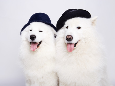 funny couple of dogs in hats. Cute white doggy family. Symbol of 2018 New Year Stock Photo