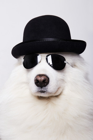 Dog in hat and sunglasses. Cute white doggy. Symbol of 2018 New Year Stock Photo