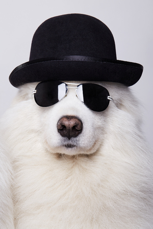 funny Dog in hat and sunglasses. Cute white doggy. Symbol of 2018 New Year