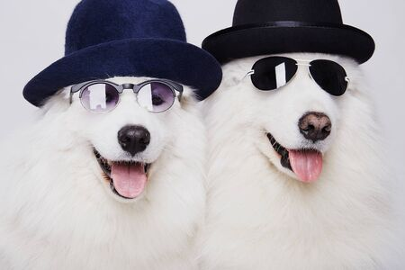 funny couple of dogs in hats and sunglasses. Cute white doggy family. Symbol of 2018 New Year Stock Photo