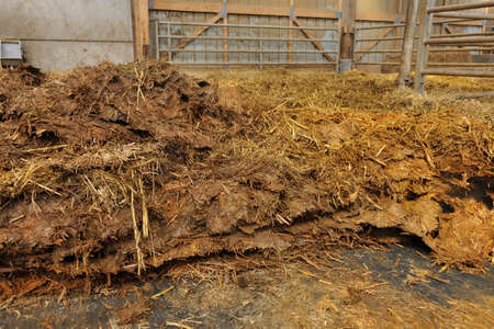 Normandy, France, March 2013. Loading of manure in a stall of dairy farming to be spread in field