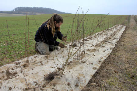Normandy, France, September 2010.