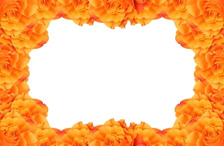 A frame of beautiful orange rose flowers with white background photo