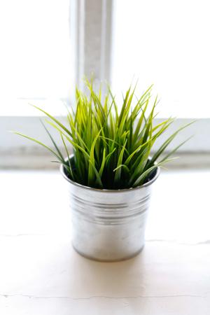 Grass bushes in a pot on windowstill photo