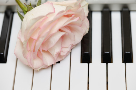 Rose closeup on electronic piano keyboard photo