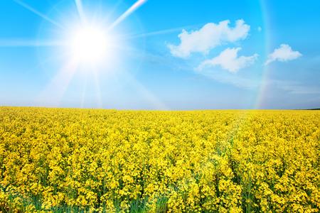 여름 봄 노란 꽃 필드 햇살 햇살