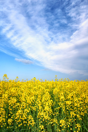 filed: spring summer spring yellow flower field sunshine