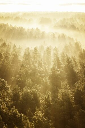 sunny: Misty beech forest on the sunrise morning in the autumn