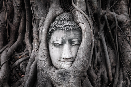 Head of Sandstone Buddha in The Tree Roots from Wat Mahathat, Ayutthaya. the ancient capitol of Thailand