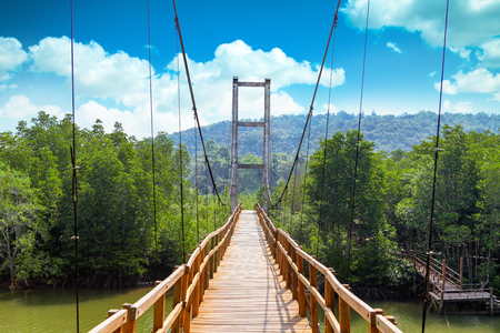 bark rain tree: Thung Kha Bay Mangrove Forest. Wooden walkway suspension bridge in forest. Chumphon, Thailand For nature walks to study coastal plants and animals. Stock Photo