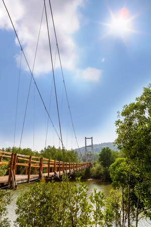 subtropical plants: Thung Kha Bay Mangrove Forest. Wooden walkway suspension bridge in forest. Chumphon, Thailand For nature walks to study coastal plants and animals. Stock Photo