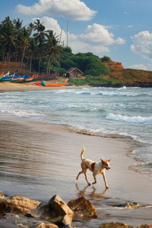 Beautiful peaceful black beach with houses and boats in Varkala, Odayam fishermen village Kerala, India. Dog is running Redakční