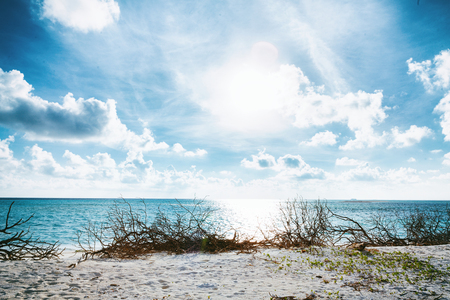 Wild Beach at Maldives island Fulhadhoo with white sandy beach and sea, snags gro, fluffy clouds in blue sky Stock Photo