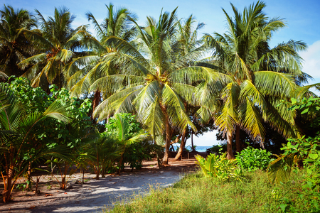 South Beach Palm Tree Covered Alley, Maldives, Fulhadhoo