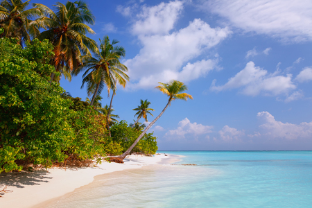 shorelines: Scenic view of Wild idyllic Beach at Maldives island Fulhadhoo with white sandy beach and sea and curve palm