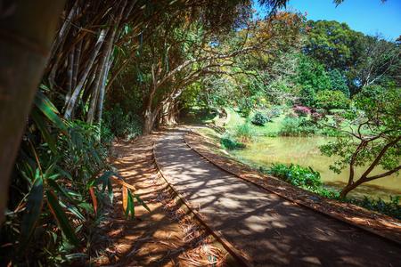 Allée verte en bambou, sentier et banc dans les jardins Royal Botanic King. Peradeniya. Kandy. Sri Lanka. Banque d'images - 91121776