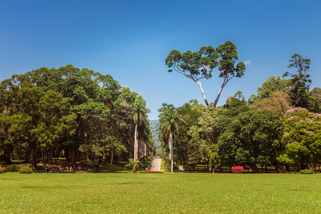 Panoramic view of Royal Botanical King Gardens, Peradeniya, Sri Lanka, locates near Kandy