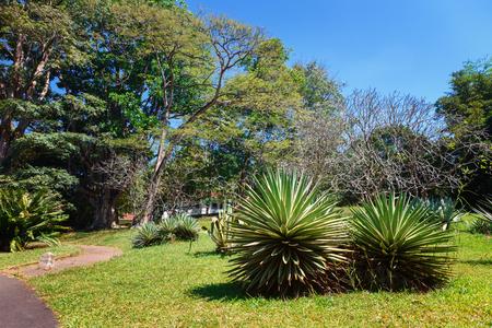 Panoramic view of Royal Botanical King Gardens, Peradeniya, Sri Lanka, locates near Kandy. Alley, Lake and river Banco de Imagens