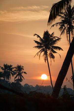 Sunrise over the backwaters in Kerala, India, near Varkala, Odayam beach