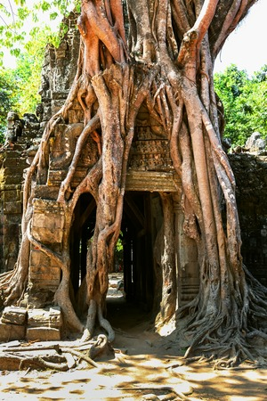 Prasat Ta Prum or Ta Prohm Temple complex, near Siem Reap, Cambodia. Huge tree roots grew on the temple entrance Stock Photo