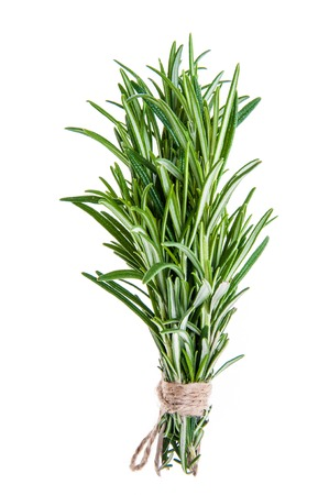 tied in: Fresh Rosemary sprigs tied in bundle isolated on white background Stock Photo