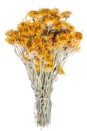 curative: Bouquet of dried flowers yarrow on white background. The yarrow is known as herb widely used with curative intent. Stock Photo
