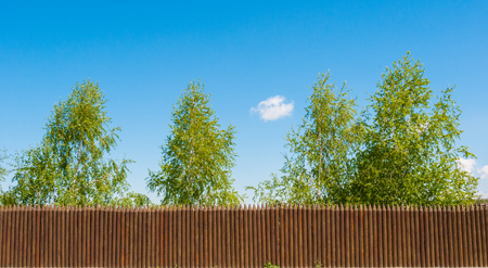 Old wooden fence  and trees on the lake coast, Russian landscape Stock Photo