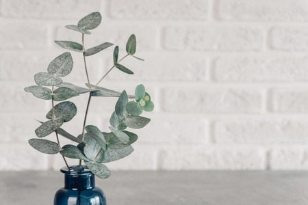 green leaves eucalyptus in a blue vase against a white brick wall Scandinavian style minimalism. 版權商用圖片