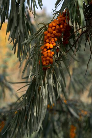 Falling oak leaves on the scenic autumn forest Archivio Fotografico - 132443483