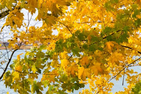 Collection of Beautiful Colorful Autumn Leaves / green, yellow, orange, red. Archivio Fotografico - 131593504