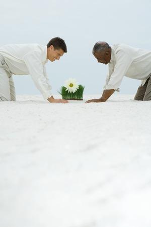 arrodillarse: Dos hombres en cuatro patas en la arena, ambos mirando a la flor que crece en la hierba de trigo